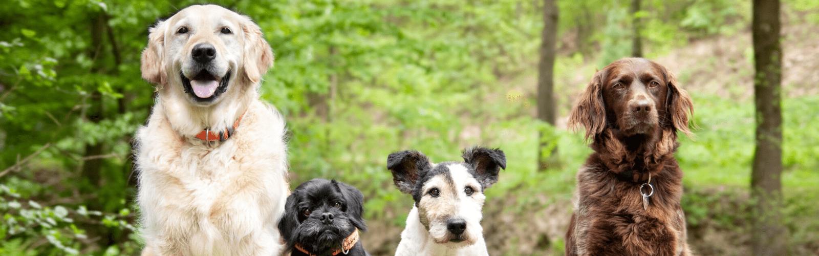 Big Dog Little Dog – 26 April 2020