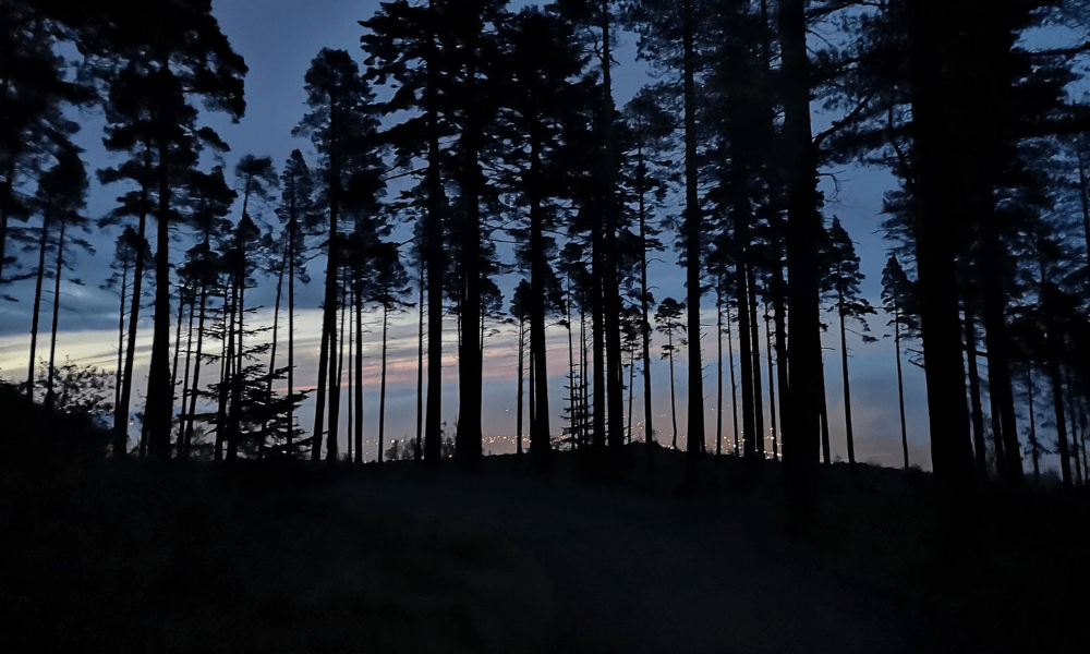 Silhouette of trees in moonlight - Slieve Donard Moonlit walk challenge